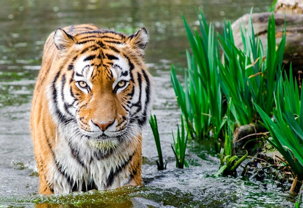 Tiger King: Duistere kant van een werelds paradijs